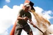 Cresce 20% ao ano a produção de arroz sem agrotóxicos em assentamentos | Foto: Leonardo Savaris