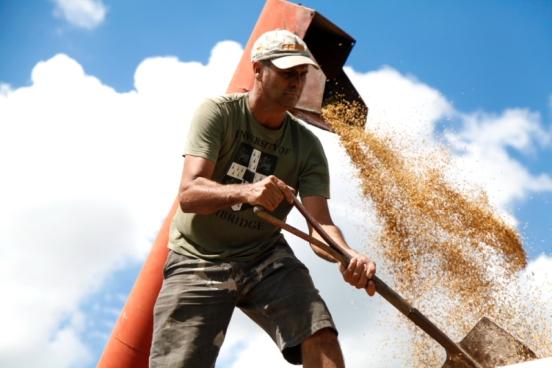 Colheita de arroz orgânico em Filhos de Sepé
