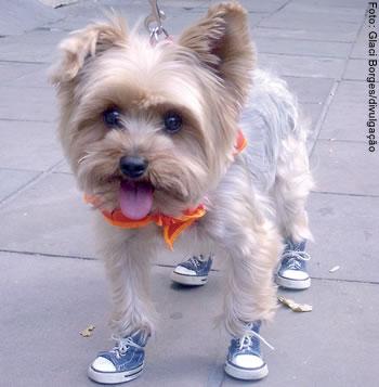 Frederico não quer mais passear descalço porque o uso de tênis diminuiu a resistência da sola das suas patas