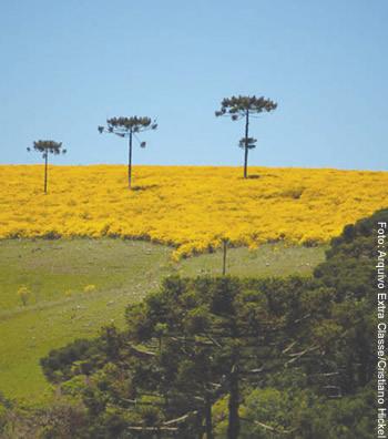 Região da hidrelétrica de Pai Querê acumula histórico problemático