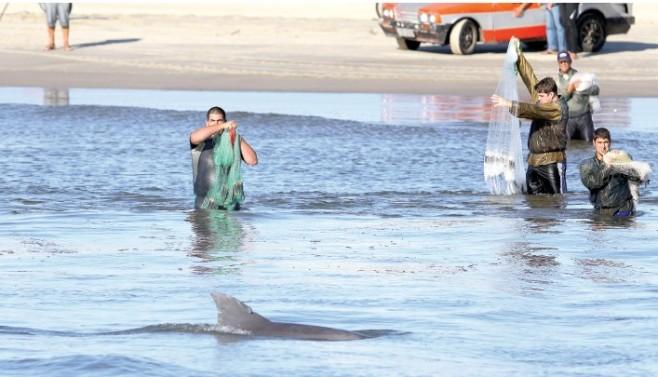 Ação humana ameaça botos na Barra do rio Tramandaí