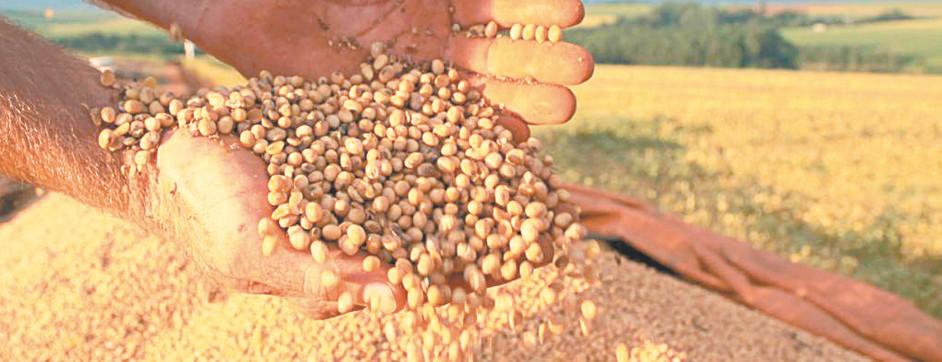 A guerra dos agricultores gaúchos contra a Monsanto