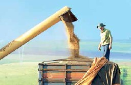 Safra de grãos 2014/2015 deve atingir 202,18 milhões de toneladas, aumento de 4,5%; e área plantada cresceu 1,3%