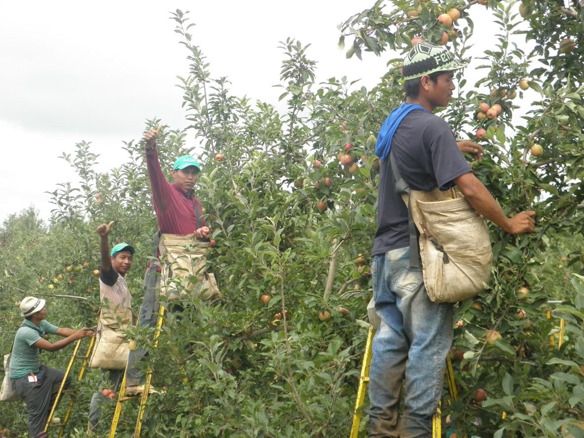Contratação de assalariados no campo segue Normas Regulamentadoras do Minisitério do Trabalho
