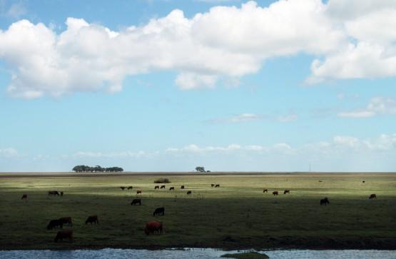 Vácuo jurídico deixa o Bioma Pampa desprotegido | Foto: Igor Sperotto
