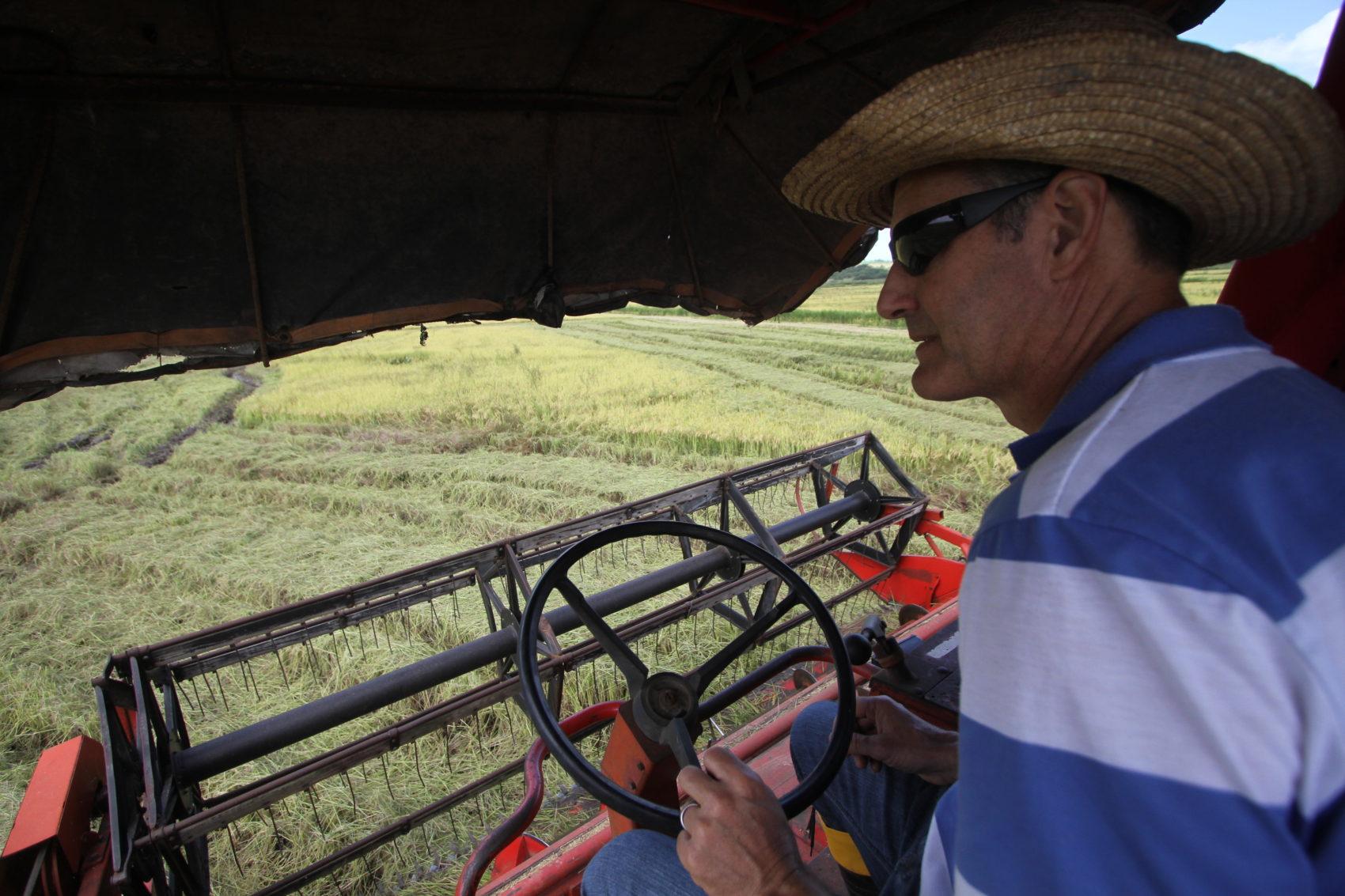 MST colheu 27 mil toneladas de arroz sem veneno