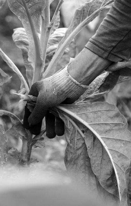 No RS, estado que despejou quase 100 mil toneladas de veneno nas lavouras em apenas dois anos e onde o consumo per capita é de 30 litros de agrotóxicos por ano, o dobro da média do país, o câncer é a primeira causa de morte em 140 municípios. Na região Noroeste, em média dez agricultores são diagnosticados com câncer por dia