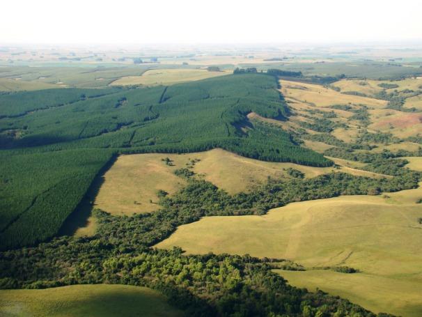Monocultivo de pinus, eucalipto e soja, sobrepastejo animal e uso de agrotóxicos modificaram quase 60% do Bioma Pampa, um dos centros de maior biodiversidade do planeta