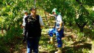 Grupo Móvel do Ministério do Trabalho e Procuradores do Ministério Público do Trabalho estão fiscalizando fazendas nos três estados da região Sul | Foto: MPT/RS/ Divulgação