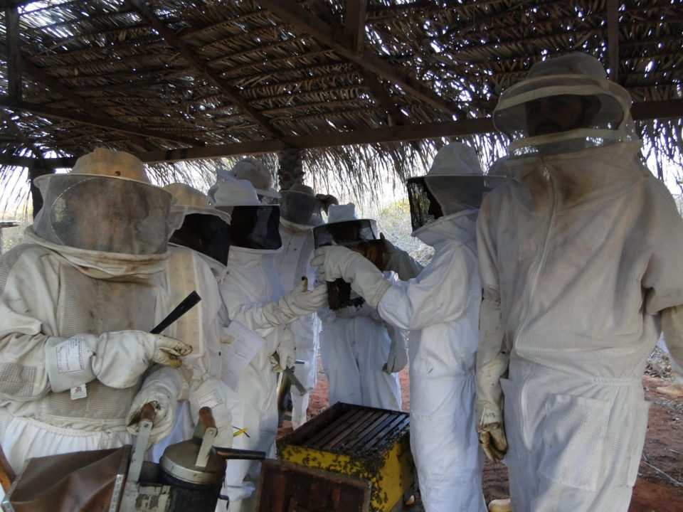 Pesquisadores durante aula prática de manejo com abelhas africanizadas