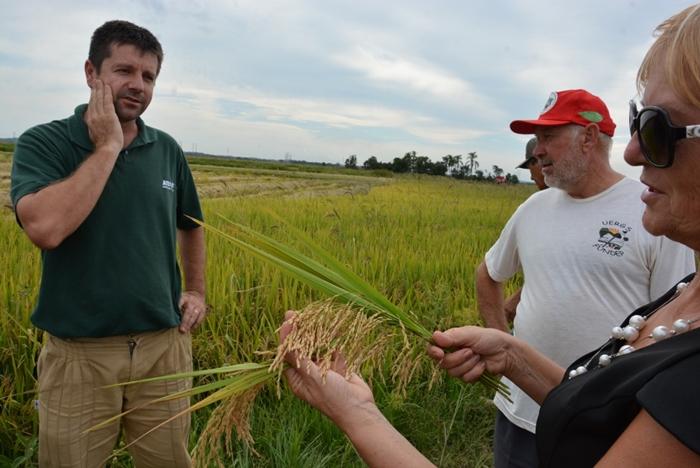 Sem terra colhem 16 mil toneladas de arroz orgânico