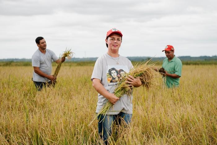 Produção de arroz orgânico envolve hoje 363 famílias assentadas |