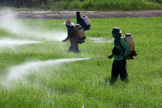 Agrotóxicos | Foto: Agência Brasil/Arquivo
