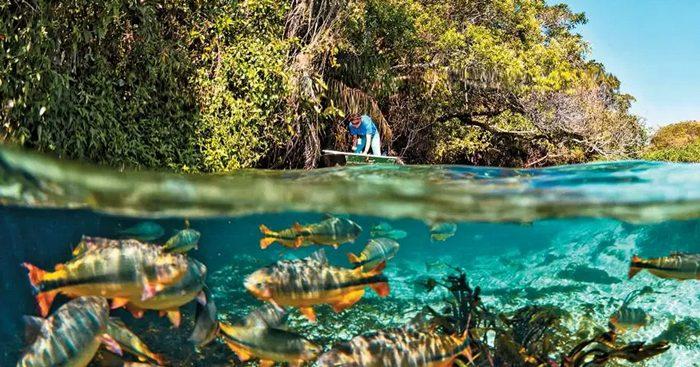 Atingido por desmonte da política ambiental, país tem em seu território a maior parte da Amazônia, 800 mil indígenas e o ecossistema mais rico do mundo