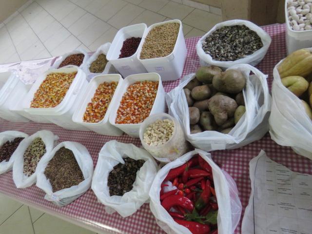 Sementes, ramas, bulbos e mudas de diversas espécies de hortaliças e grãos foram trocadas e comercializadas por produtores