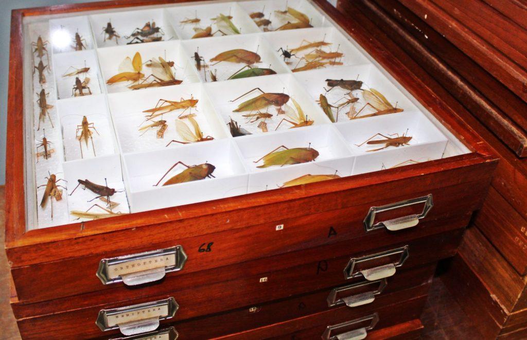No último levantamento, de 2018, as coleções somavam mais de 600 mil exemplares da fauna e flora nativas, atual e fóssil