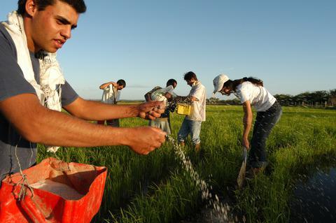 Os assentamentos de Reforma Agrária estão sob ataque no RS | Foto: Divulgação