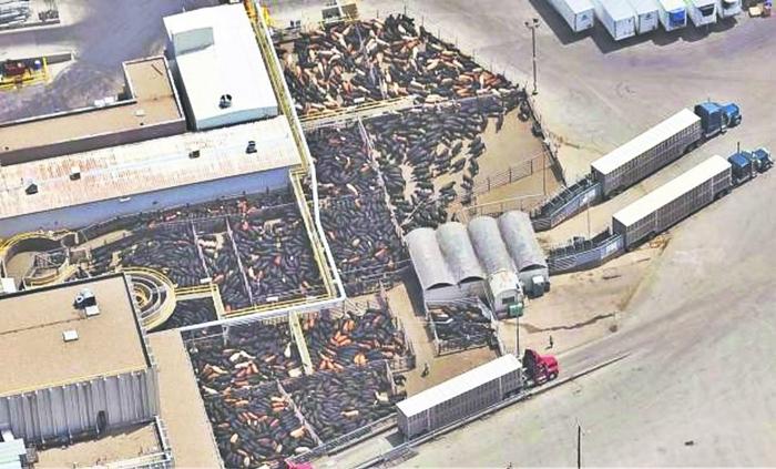 Matadouro da JBS no Colorado, Estados Unidos. A maior processadora de carnes do planeta pertence ao grupo JB&F, que deve R$ 80 milhões à Previdência