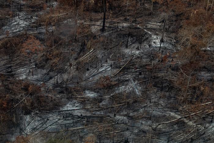 """Com 431 focos de incêndios, Altamira foi um dos municípios do Pará onde fazendeiros e exploradores de madeira ordenaram o """"dia do fogo"""""""
