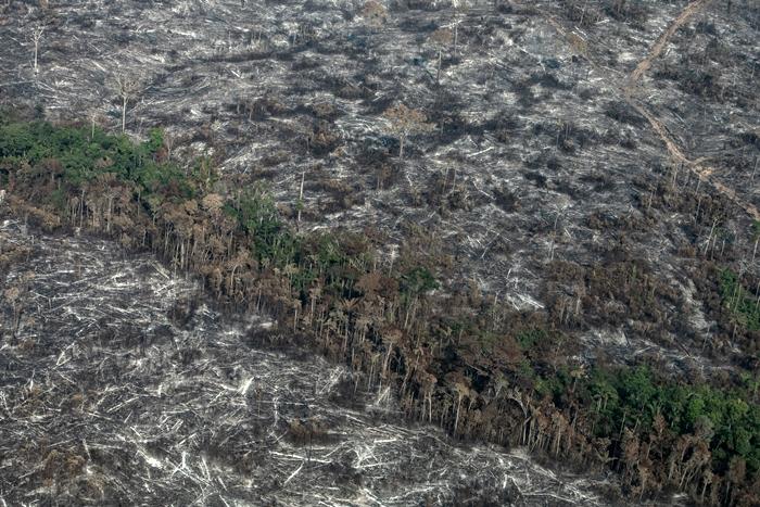 """""""Não faltaram alertas de que o retrocesso ambiental seria um tiro no pé do próprio agronegócio, porque a proteção florestal é uma estratégia de competitividade desse setor"""""""