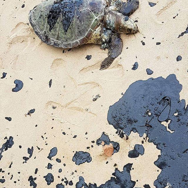 Petróleo cru já atinge mais de 220 localidades de nove estados nordestinos e dizima animais marinhos