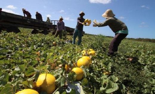 Frutas doces, vidas amargas | Foto: Reprodução/Web