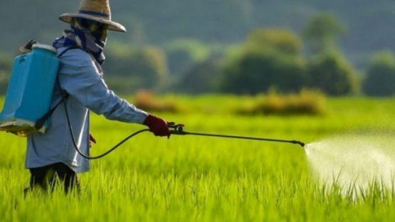 Liminar suspende liberação de agrotóxicos | Foto: Reprodução