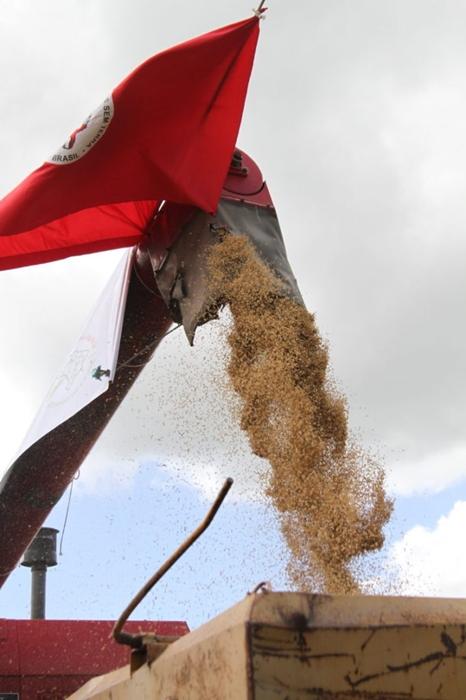 Os sem-terra são os maiores produtores de arroz agroecológico da América Latina: 16 mil toneladas em 2019