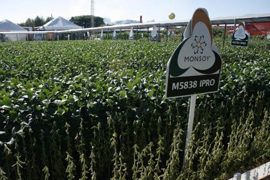 Cade investiga Bayer e Monsanto por supostas condutas anticompetitivas | Foto: Monsanto/ Divulgação