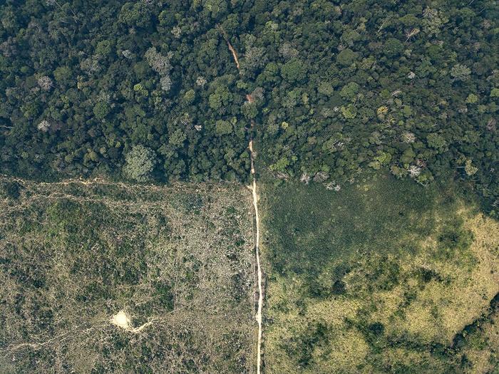 A Terra Indígena Karipuna (RO) vem sendo rapidamente destruída pela ostensiva invasão de madeireiros e grileiros: mais de 11 mil hectares de floresta amazônica já foram destruídos