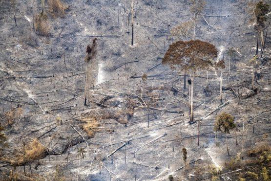 Câmara analisa alterações na regularização fundiária | Foto: Greenpeace/ Divulgação