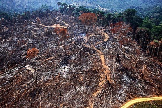 Cresce desmatamento da Amazônia Araquem Alcântara | Foto: Araquém Alcântara