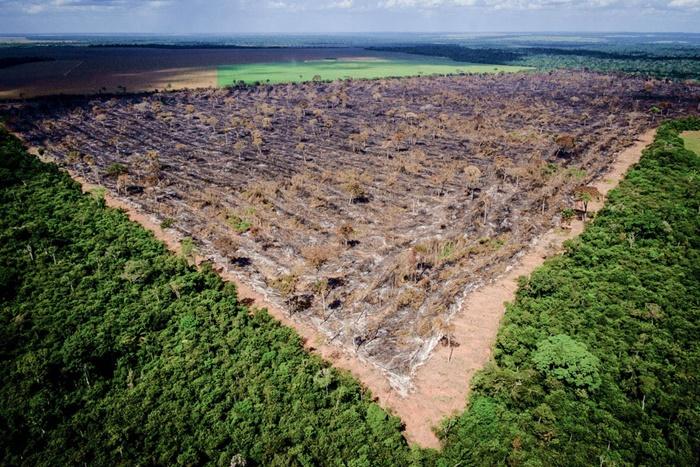 """""""Na MP era evidente que o foco de interesse do governo era a regularização do desmatamento, especialmente na Amazônia, da criação de gado e plantio de soja em áreas públicas, especialmente em terras indígenas e terras quilombolas ainda não regularizadas"""""""