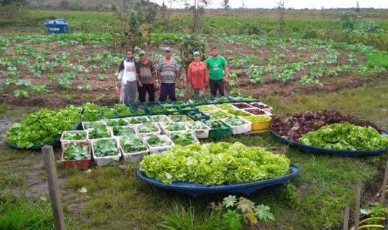 Paralisação da reforma agrária ameaça produção de alimentos | Foto: MST/ Divulgação