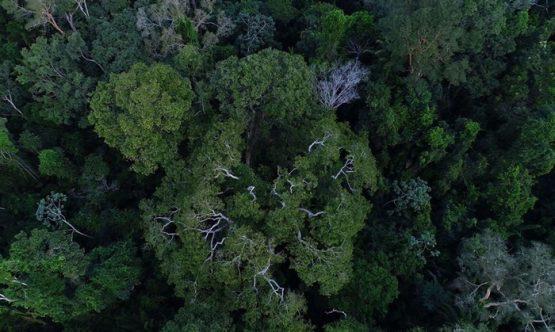 Justiça decide que gestão de florestas não é atribuição da Agricultura | Foto:  TVBrasil/ Divulgação