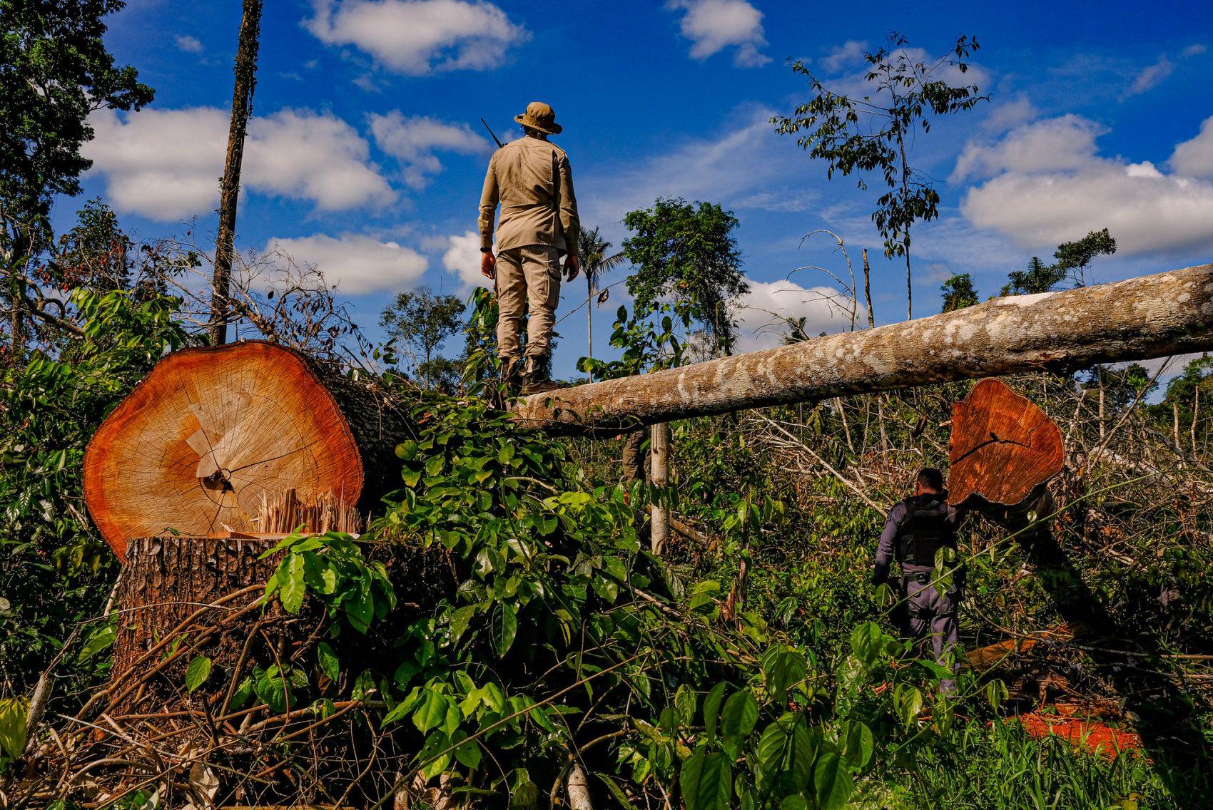 O desmatamento aumentou nos últimos anos, na visão de 77% da população