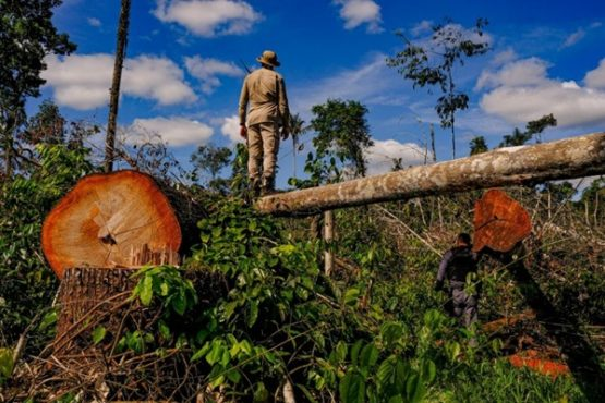 degradação-da-Amazônia | Foto: Mayke Toscano/Secom-MT/Fotos Públicas