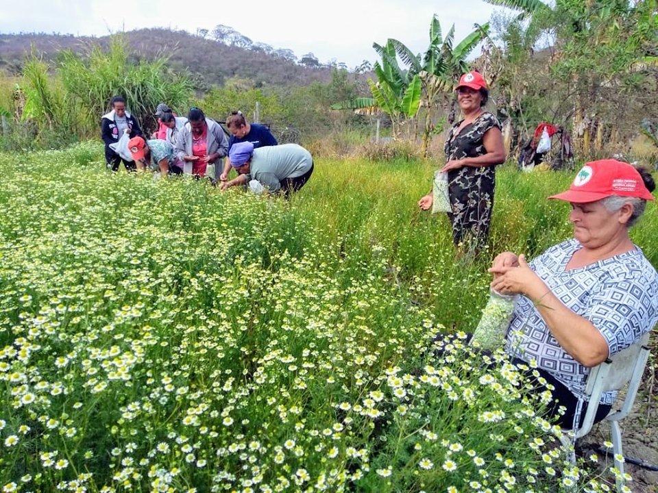 Estruturado há mais de duas décadas, Quilombo abriga 450 famílias de agricultores e se transformou em polo agroecológico