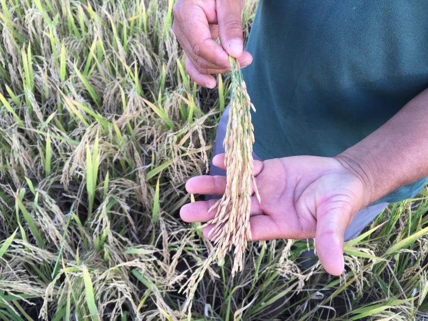 O presidente Jair Bolsonaro vetou Projeto de Lei 735 que foi apresentado pela oposição e aprovado no Congresso para garantir apoio emergencial à agricultura familiar por meio de um apoio emergencial e crédito para a produção de alimentos