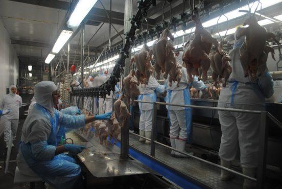 A saúde humana e a vida dos animais | Foto: Ministério Público da 4ª Região/ Divulgação