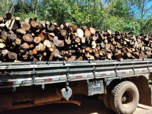 Operação do MP no estado encontra área desmatada 156% maior no do que no ano anterior | Foto: MPRS/Divulgação