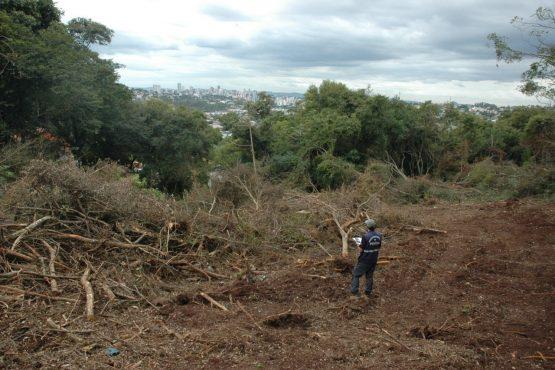 Prejuízo com desmatamento no Estado passa de R$ 16 milhões em um ano | Foto: IGP/Divulgação