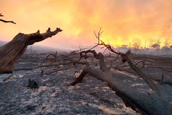 Violência contra povos indígenas, devastação ambiental e o Acordo Mercosul-UE | Foto: Ibama/ Divulgação