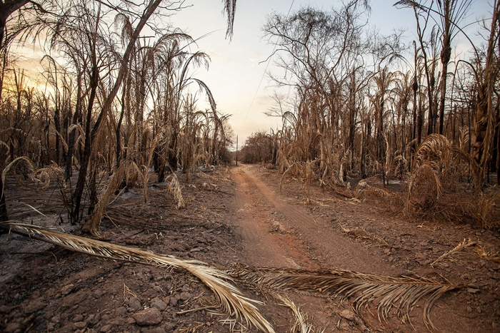 Plantação queimada pelo fogo no Pantanal – Barão Melgaço (MT)