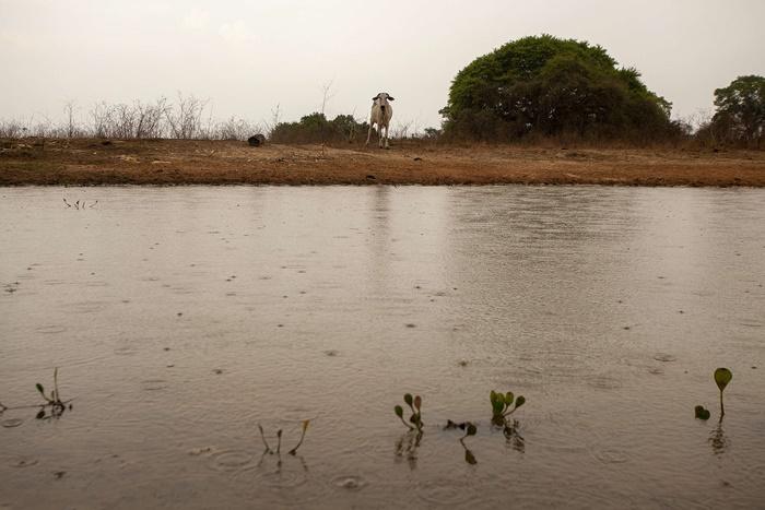Chuva no Pantanal, em Poconé (MT)