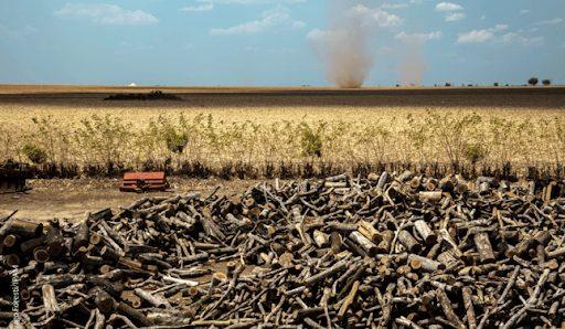 A transformação do Cerrado revela uma ação contínua e acelerada e as áreas de vegetação campestre e florestal se reduziram, progressivamente, dando lugar à pastagem com manejo e área agrícola