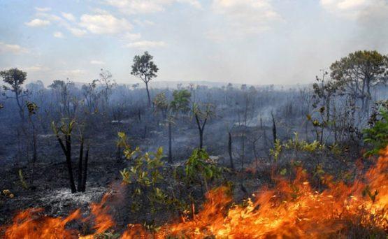 Brasil já perdeu 50% do Cerrado | Foto: Reprodução/Fapesp/Divulgação