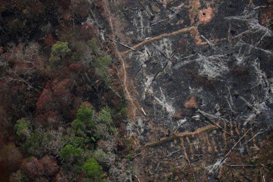 ONGs exigem cumprimento do plano de combate ao desmatamento | Foto: Inpe/ Divulgação