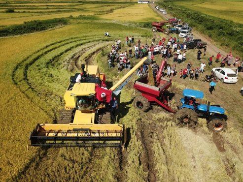 Pulverização de agrotóxico atinge produções agroecológicas de Nova Santa Rita | Foto: Alexandre Adair/ MST