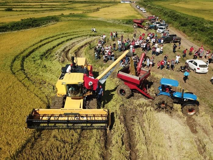 Colheita do arroz orgânico no assentamento Santa Rita de Cássia, que tem sido alvo de ataques do agronegócio